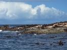 Duiker Island - wyspy fok