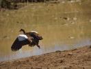 Rezerwat Addo - Ptak