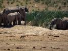 Rezerwat Addo - Słoń i hiena
