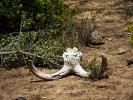 Rezerwat Addo - Kości zjedzonych zwierzaków