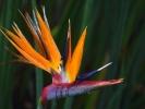 Kapsztad - Ogrod Kirstenbosch