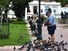 Kapsztad -tereny pierwszej farmy w Kapsztadzie - teraz ogród miejski