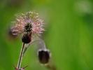 dsc_0218-kwiat