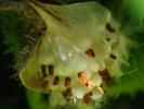 dsc_0340-biale-kwiatki